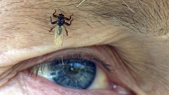 Лосиная муха чем опасна для человека — Nasekomie